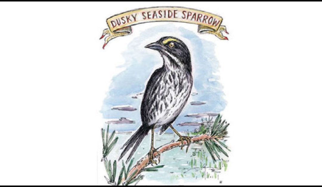 Where-Have-Sparrows-Gone